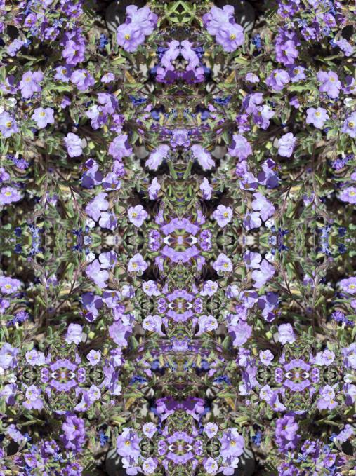Purple Flowers_web